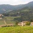 VIneyards of Chianti (Tuscany) — Stock Photo #7719411