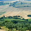 Tuscany, landscape at summer — Stock Photo