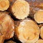 Firewood — Stock Photo #6763841
