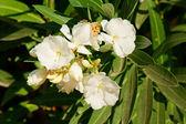 Květinové — Stock fotografie