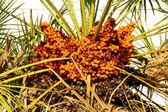 Güzel palm — Stok fotoğraf