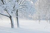 Schnee und wind — Stockfoto