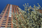 Highrise building and blooming tree in the city — Stock Photo