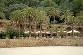 Palm trees in Park Guell in Barcelona Spain — Foto de Stock