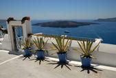 Cacti on the street in Thira, Santorini Greece — Foto Stock