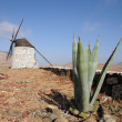 Stock Photo: Aloe Verand traditional Windmill on Canary Island Fuerteventura, Spain