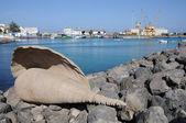 Shell sculpture in Puerto del Rosario, Fuerteventura Spain — 图库照片