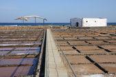Velrybí kostru a slané v fuerteventura španělsko — Stock fotografie