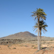 Landscape on the Canary Island Fuerteventura, Spain - Stock Photo