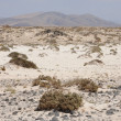 Stock Photo: Landscape on Canary Island Fuerteventura, Spain