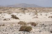 Krajina na kanárské ostrov fuerteventura, španělsko — Stock fotografie
