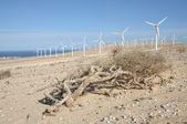Windkraftanlagen in der wüste — Stockfoto