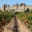 Carcassonne from the vineyard. Southern France - Stock Photo