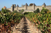 Carcassonne from the vineyard. Southern France — Stock Photo