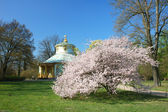 The Chinese House in the Sanssouci Garden — Stock Photo