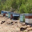 Apiary boxes with bees in Portugal — Stock Photo