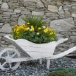 Stock Photo: Flower bed pushcart in front of house