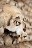 Skull in the wall — Stock Photo