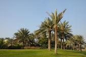 Palm Trees in Dubai, United Arab Emirates — Stock Photo