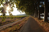 Road along Canal du Midi in southern France — Stock Photo