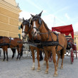 Stock Photo: Horse driven cabs at Schonbrunn Palace in Vienna, Austria