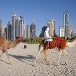 Stock Photo: Camels on Beach in Dubai
