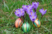 Colorful easter eggs under crocus flowers — Stock Photo