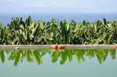 カナリアにバナナ プランテーション用の貯水池テネリフェ島、スペインの島 — ストック写真