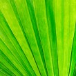 Green palm leaf macro — Stock Photo