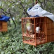 Songbird in cage. Shanghai 's Square Park, China — Stock Photo #7910728