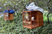 Songbird in cage. Shanghai 's Square Park, China — Stock Photo