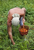 Farmer Harvesting Vegetable — Stock Photo