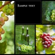 Beautiful Grapes Collage - Stock Photo