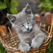 Kitten in basket — Stock Photo #7164552