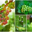 Beautiful Grapes Collage — Stock Photo #7449274