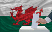 Man voting on elections in wales in front of flag — Foto de Stock