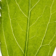 Part of green leaf in close up - Stock Photo