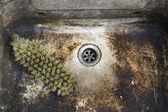 Dirty, unhygienic washbowl — Stock Photo