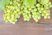 Bunches of grapes. — Stock Photo