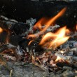 Camp fire — Stock Photo #7670999