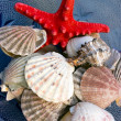 Stock Photo: Seashells and starfish