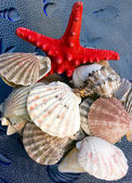 Seashells and starfish — Stock Photo