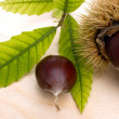 Chesnut — Stock Photo