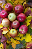 Appels en autumun bladeren — Stockfoto
