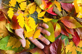 Leaves in hand — Stock Photo