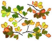 Oak branches — Stock Photo