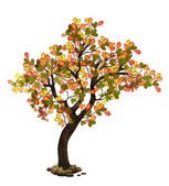 Oak tree in fall — Stock Photo