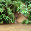 Tropical forest plants and river — Stock Photo