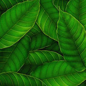 Fresh Green leaves background — Stockfoto