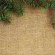 Stock Photo: Christmas border from branch